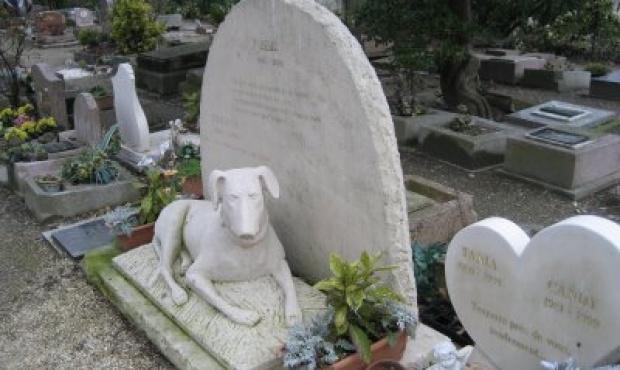 En bah a blanca funciona un cementerio para mascotas for Jardin 935 bahia blanca